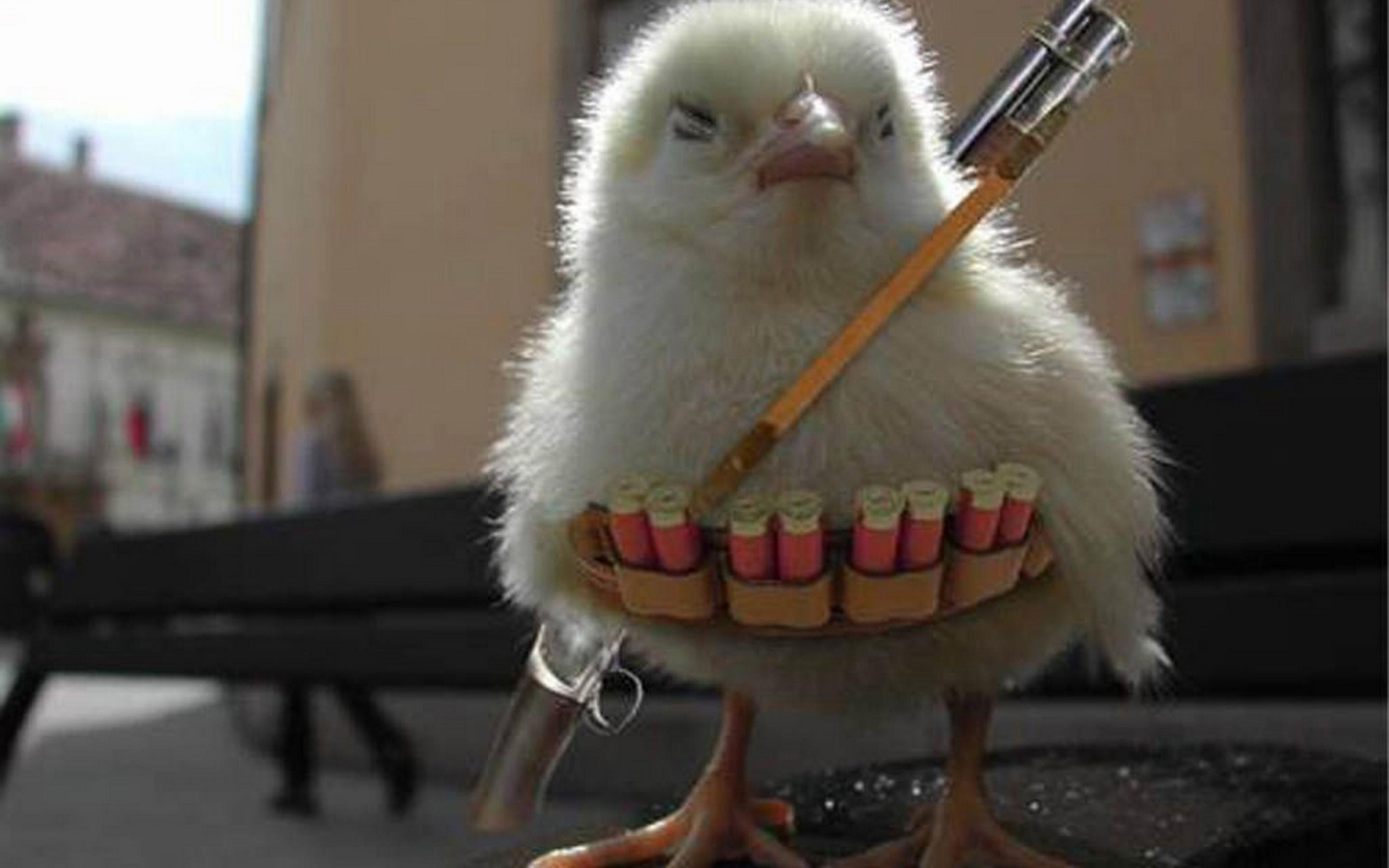 Funny Animals With Guns  YouTube